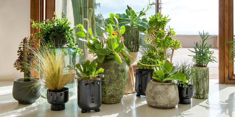 Lutter contre les ondes grâce aux plantes : info ou intox ?
